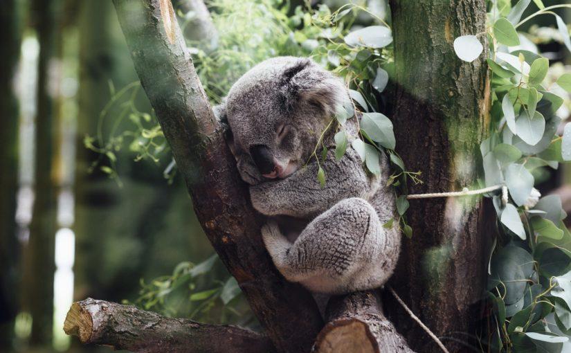 Actuele opdracht: Natuur voor lange tijd verwoest in Australië